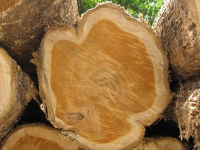 heartwood-vs-sapwood